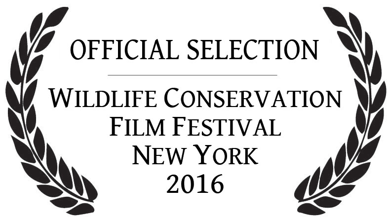 WCFF Official 2016 Selection1