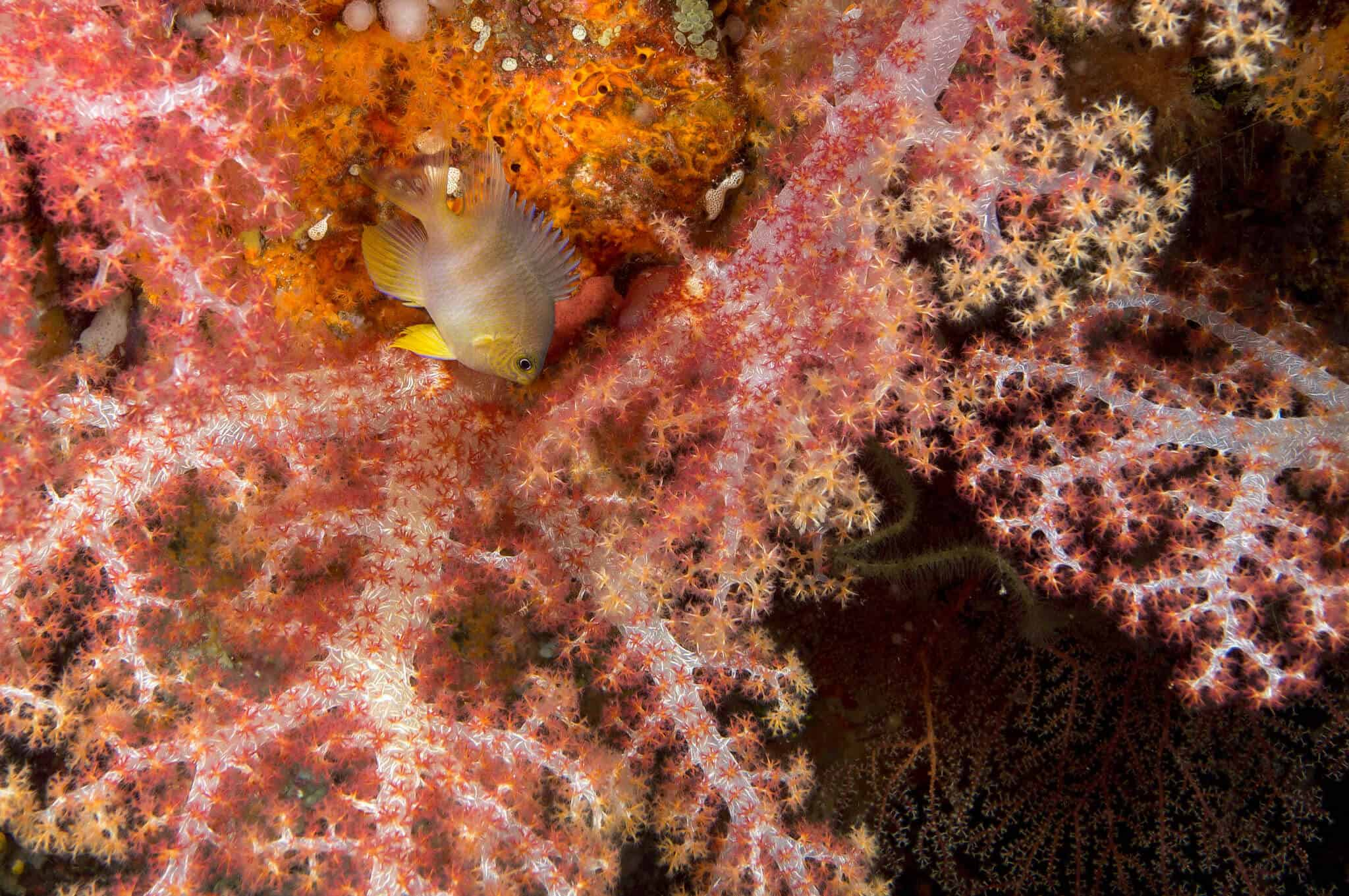 Soft coral - Photo by Ratha Grimes