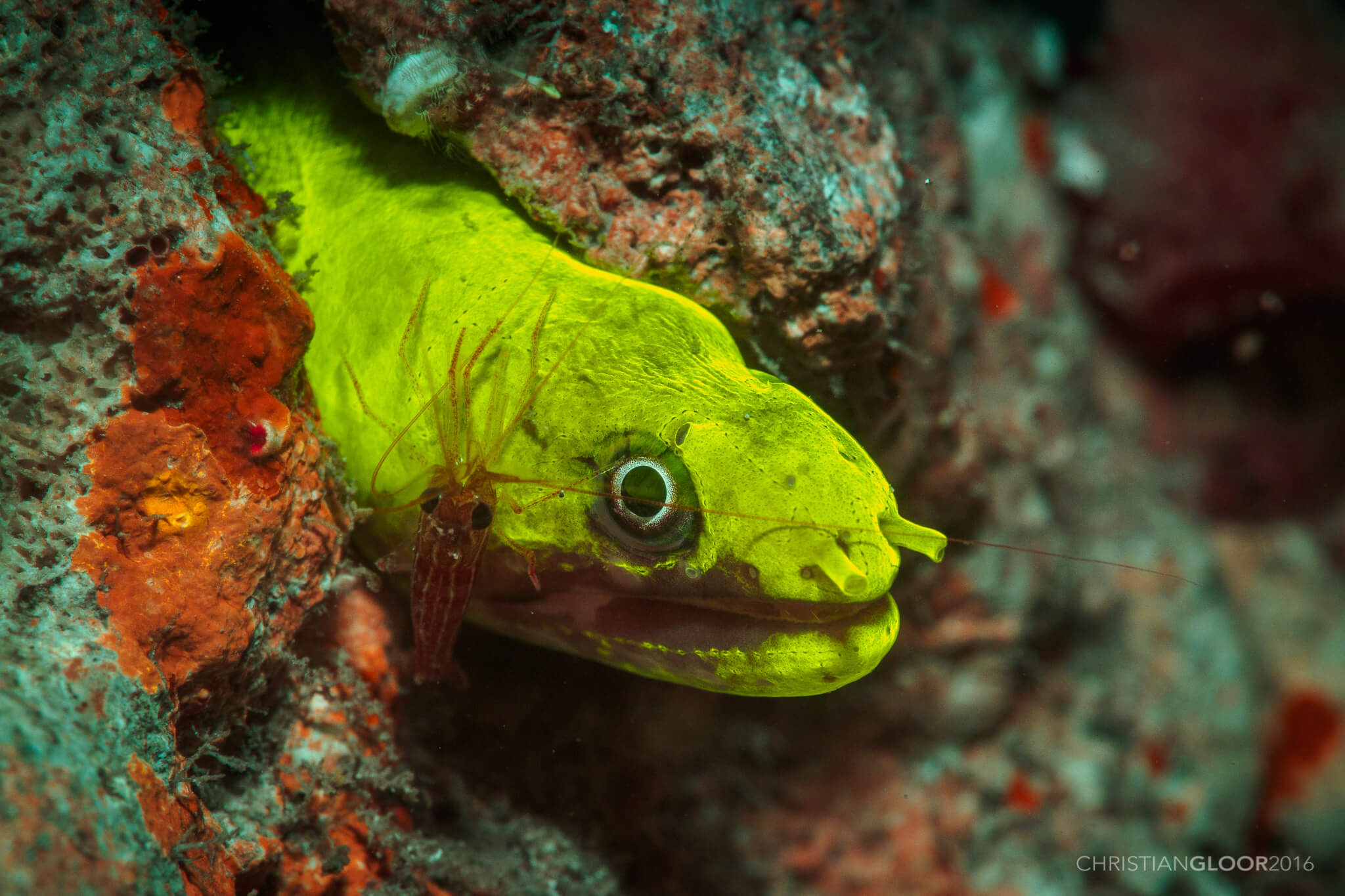 Moray eel on Fluorescent night dive