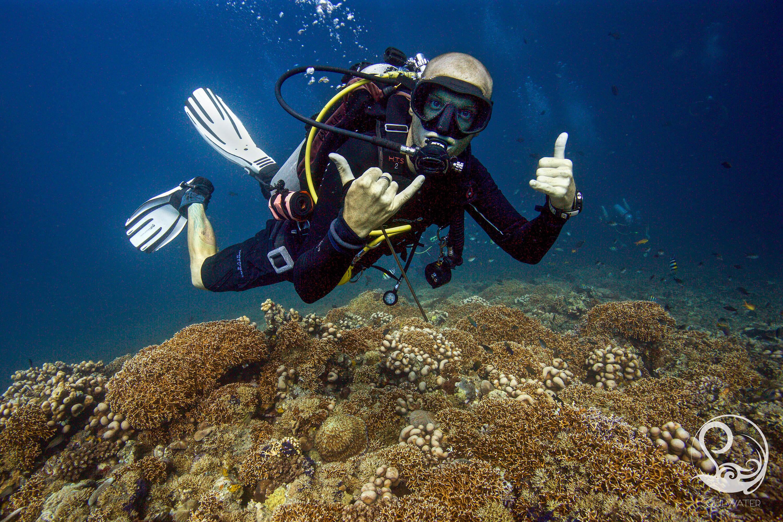 Scuba diver on pretty coral reef