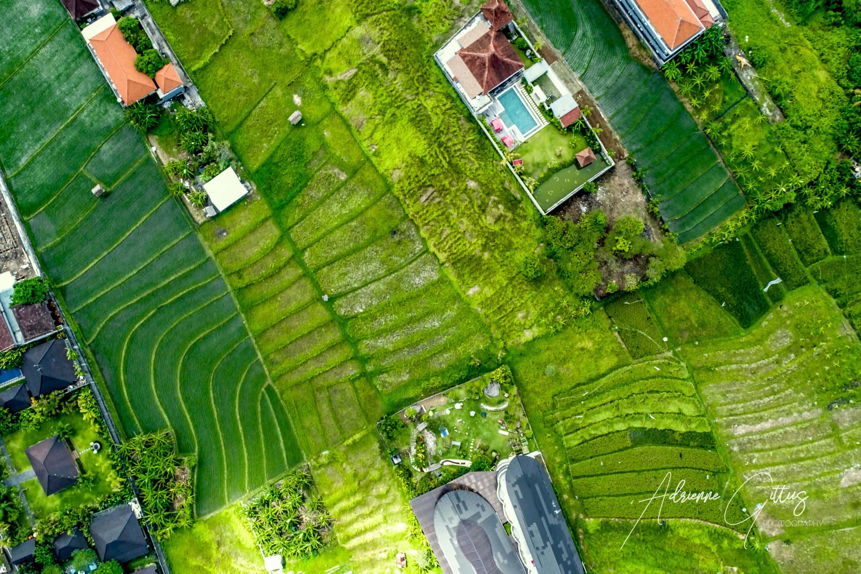 aerial, rice fields, paddies, drone, bali, indonesia