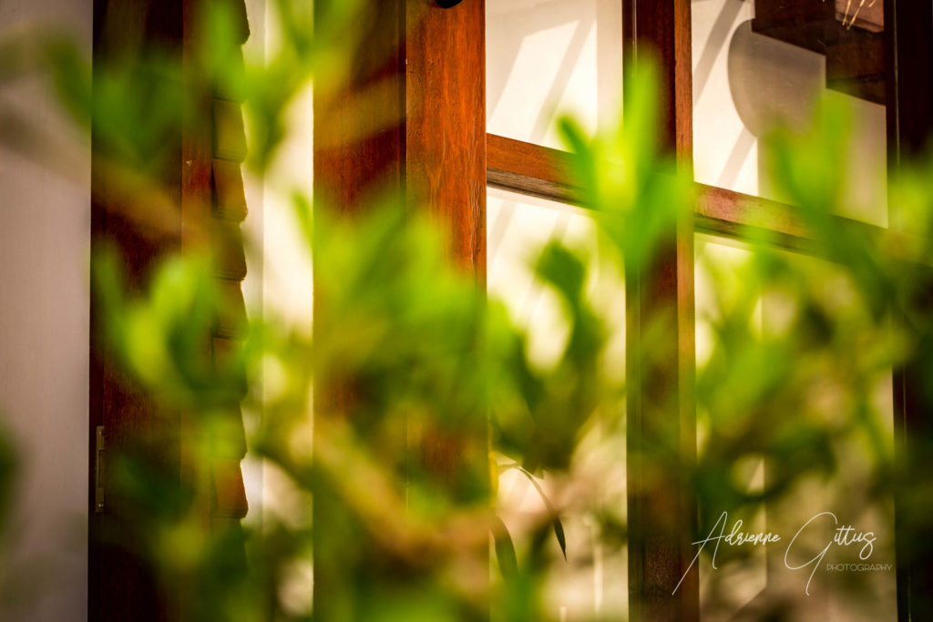 Gili Air Sanctuary, Indonesia, looking through the bonsai tree, interior window